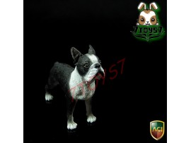 ACI Toys 1/6 Dog_ Boston Terrier _Animal Pet Diorama Now AT068Z
