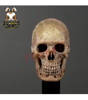 ACI Toys 1/6 Cannibal Skull (ACI-753) AT032A