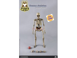[Pre-order] Coo Model 1/6 BS011 The Human Skeleton (Diecast Alloy)_ Set _CL066Z