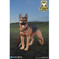 DID 1/6 AS003 Super Realistic German Shephard_ Set w/ colar _DD096Z