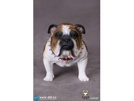 DID 1/6 Animal Series British Bulldog_ Box Set #B _Animal diorama DD058D