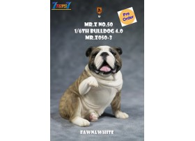 [Pre-order deposit] Mr. Z 1/6 MRZ050 Animal Series No.50 Bulldog 4.0_ Set #3 _MRZ056C