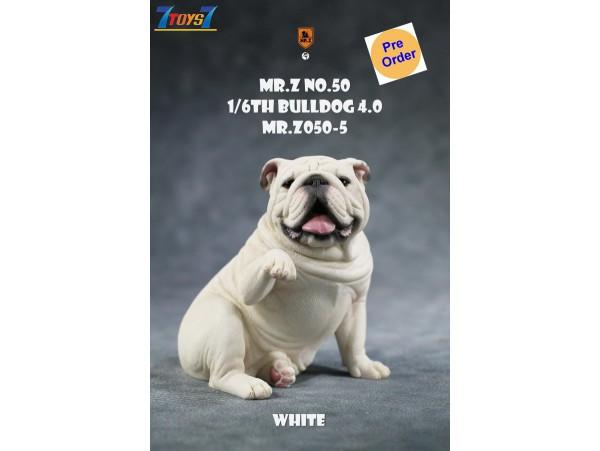 [Pre-order deposit] Mr. Z 1/6 MRZ050 Animal Series No.50 Bulldog 4.0_ Set #5 _MRZ056E