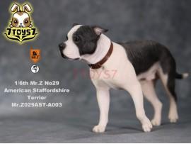 Mr. Z 1/6 MRZ029 Animal Series No.29 American Staffordshire Terrier_ A003 Dog w/ collar Set _MRZ029A