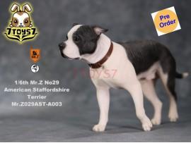 [Pre-order] Mr. Z 1/6 MRZ029 Animal Series No.29 American Staffordshire Terrier_ A003 Dog w/ collar Set _MRZ029A