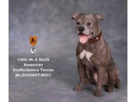 Mr. Z 1/6 MRZ029 Animal Series No.29 American Staffordshire Terrier_ B001 Dog w/ collar Set _MRZ027B