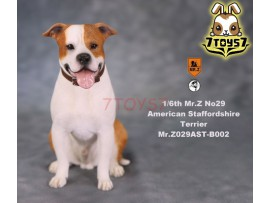 Mr. Z 1/6 MRZ029 Animal Series No.29 American Staffordshire Terrier_ B002 Dog w/ collar Set _MRZ028B