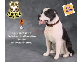 [Pre-order] Mr. Z 1/6 MRZ029 Animal Series No.29 American Staffordshire Terrier_ B003 Dog w/ collar Set _MRZ029B