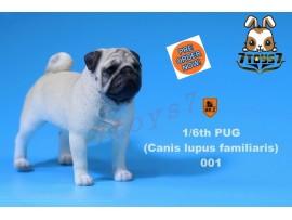 [Pre-order] Mr. Z 1/6 Pug (Canis Iupus familiaris)_ 001 Dog w/ collar Set _Animal Statue MRZ014A
