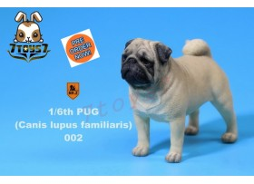 [Pre-order] Mr. Z 1/6 Pug (Canis Iupus familiaris)_ 002 Dog w/ collar Set _Animal Statue MRZ014B