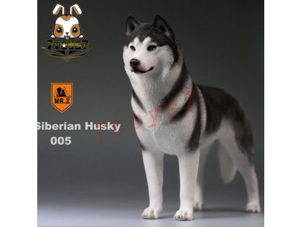 Mr. Z 1/6 Siberian Husky_ 005 Dog w/ collar Set _Animal Statue MRZ012E