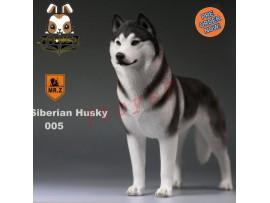 [Pre-order] Mr. Z 1/6 Siberian Husky_ 005 Dog w/ collar Set _Animal Statue MRZ012E
